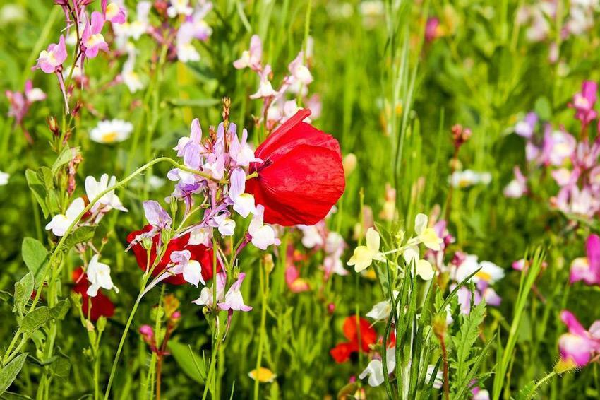 flower meadow 2377089 1280